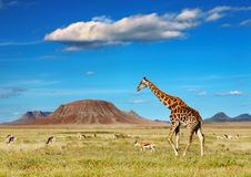 African safari Royalty Free Stock Photos