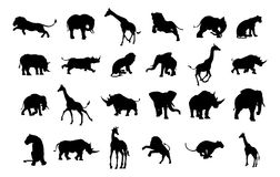 African Safari Animal Silhouettes. An African safari animal silhouette set including elephants, giraffes, rhinos and lions Stock Photography