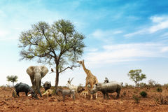 African Safari Animals Meeting Together Around Tree. Conceptual image of common African safari wildlife animals meeting together around a tree in Kruger National stock image