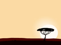 African safari background with acacia black tree Royalty Free Stock Image