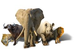 African Big Five isolated royalty free stock images