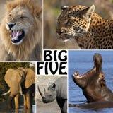African Safari - The Big Five. The Big Five - Lion, Elephant, Leopard, Hippoptamus and Rhinoceros Stock Images