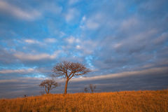 African Safari Color Sunrise Royalty Free Stock Photos