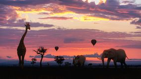 African Safari Colorful Sunrise With Animals. Silhouette of African safari animals and hot air balloons with a colorful pink, purple and orange sunrise Stock Photography