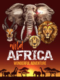 African safari poster with wild animals sketches Royalty Free Stock Photography