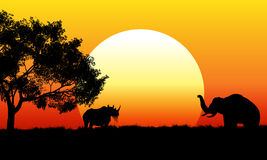 African safari scene at sunset Royalty Free Stock Photos