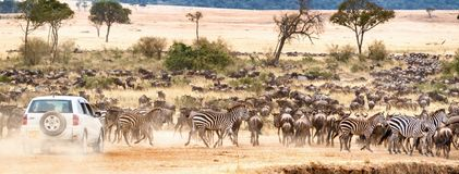 African Safari Self Game Drive. Web Banner of a car on a self safari game drive through large herds of wildebeest and zebra in Kenya, Africa during migration stock image