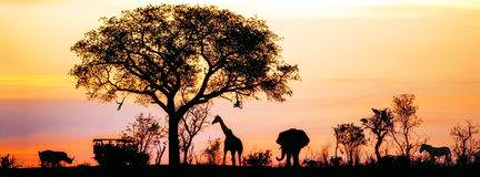 African Safari Silhouette Banner. Silhouette of African safari scene with animals and vehicle royalty free stock image