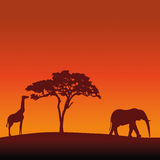African Safari Silhouette Vector Background Stock Photos