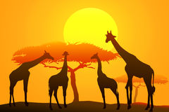 African safari at sunset -vector Royalty Free Stock Photos