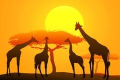 African safari at sunset -vector. African Safari at sunset is a vector illustration Royalty Free Stock Photos