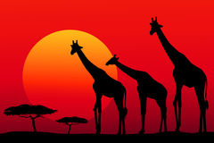 African safari at sunset -vector Stock Photos