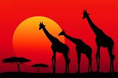 African safari at sunset -vector. African Safari at sunset is a vector illustration Stock Photos