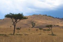 Free African Savanna Stock Photo - 2413400