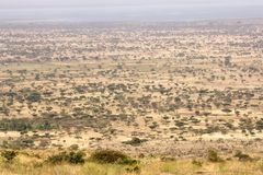 African savanna. Wilderness: African savanna landscape with acacia trees Royalty Free Stock Photo