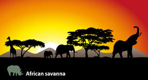 African savanna Royalty Free Stock Photography