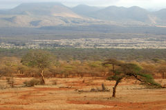 African Savanna. View of african savanna in tsavo west national park kenya with acacia tree in foreground and hills in the back Royalty Free Stock Image