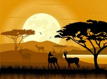 Africa landscape background. African animals and moon rise. African savanna. Antelopes silhouettes. African landscape. Safari background Royalty Free Stock Image