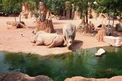 African savanna. Biopark, Valencia, Spain Stock Photo