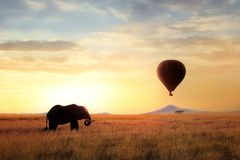 African savanna elephant at sunset in the Serengeti National Park. Africa. Wildlife of Tanzania. Artistic African image. Free copy. Space stock images