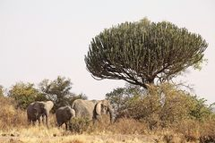African savanna Stock Photos
