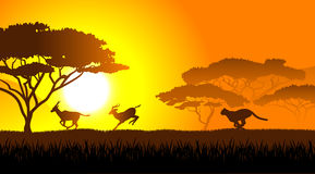 African savanna an evening landscape. On the image  is presented African savanna an evening landscape Stock Image