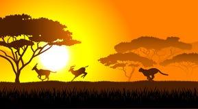 African savanna an evening landscape Stock Image