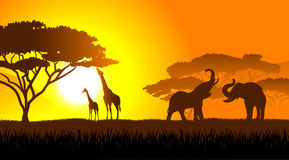 African savanna an evening landscape Stock Image