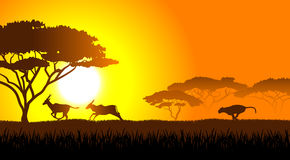 African savanna an evening landscape Stock Images