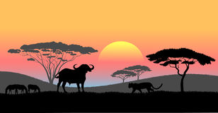 African savanna an evening landscape Royalty Free Stock Image
