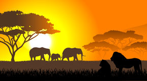 African savanna an evening landscape. On the image  is presented African savanna an evening landscape Stock Photography