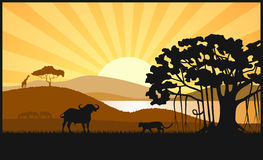 African savanna an evening landscape. On the image  is presented African savanna an evening landscape Royalty Free Stock Photo