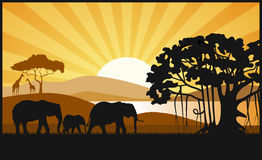 African savanna an evening landscape Royalty Free Stock Images