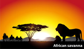 African savanna an evening landscape Stock Photography