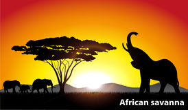 African savanna an evening landscape. On the image the sunset in the African savanna is presented Stock Photography