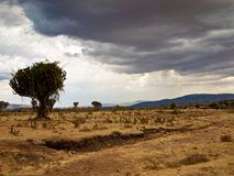 African savanna front of rain. On a background of mountains Royalty Free Stock Photo