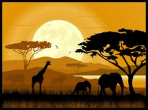 African savanna. Giraffe elephant rhino Royalty Free Stock Image