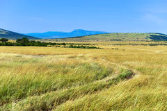 African savanna in Kenya Royalty Free Stock Images