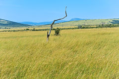 African savanna in Kenya Stock Photos