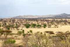 African savanna Royalty Free Stock Photography
