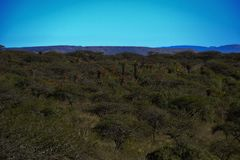 African savanna and Landscape royalty free stock image