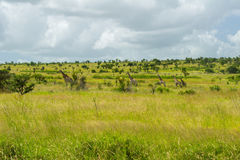 African savanna landscape Royalty Free Stock Image