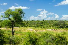 African savanna landscape Stock Images