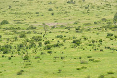 African savanna landscape Royalty Free Stock Photo