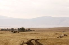 African savanna. The road in the african savanna landscape Stock Photos