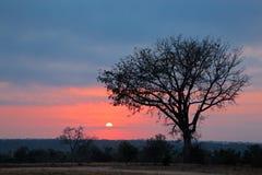 African savanna sunrise Stock Images