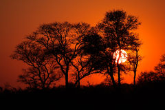 African savanna sunset Royalty Free Stock Images
