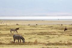 African savanna Stock Images
