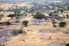African savanna Royalty Free Stock Images