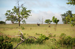 African Savannah Royalty Free Stock Images